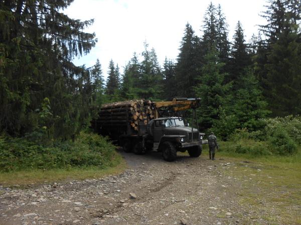 Боротьба з контрабандою лісу в ЄС: усі прикарпатські лісгоспи перевірять за дорученням Гройсмана